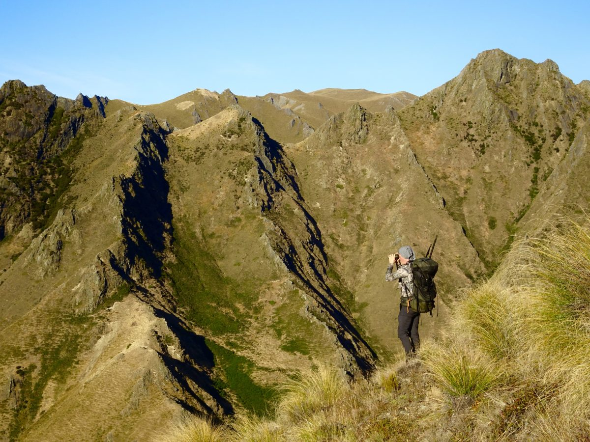 Scoping, private block, Glen Dene Hunting & Fishing New Zealand