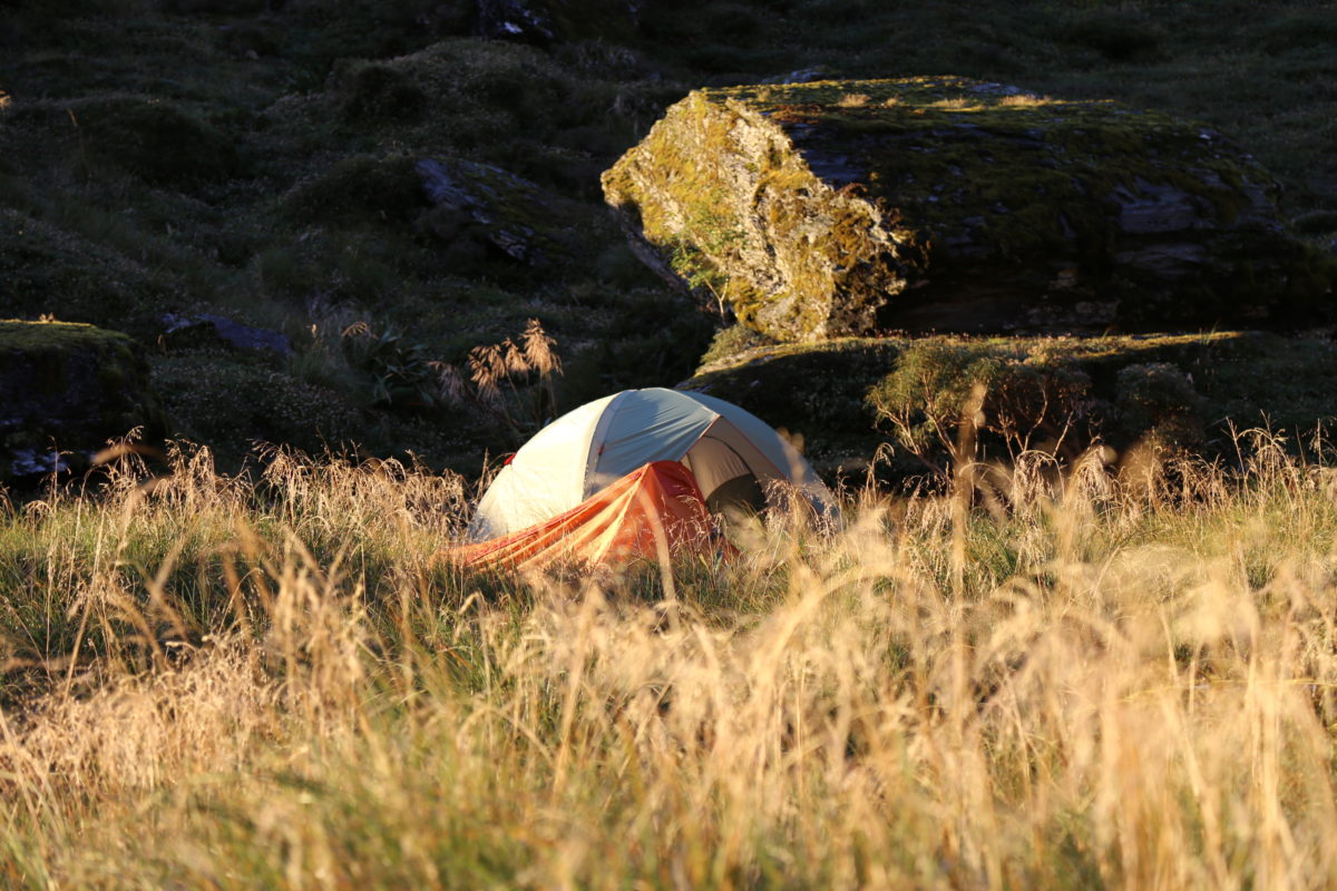 Red Stag Hunting Packages New Zealand