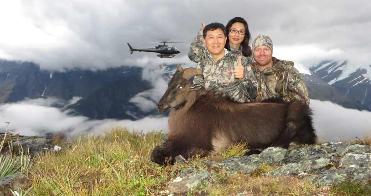 Guided Bull Tahr hunt with helicopter, Glen Dene Hunting & Fishing New Zealand