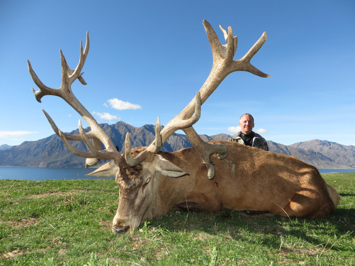 Red Stag Trophy Hunt, Glen Dene Hunting & Fishing New Zealand