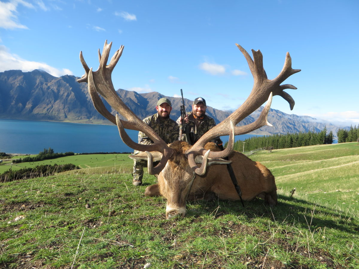 Red Stag Trophy, Glen Dene Hunting & Fishing New Zealand