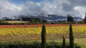 Paddon's Paddock Winery